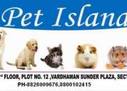All small to large breed puppies for sale in our shop!!! call 9873583948