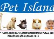 All breed puppies available in affordable prices...!