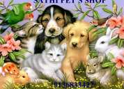 All types of dogs/puppies available for sale at reasonable prices