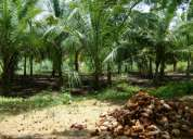 Coconut farm for sale in dhali road (udumalpet)