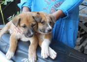 Looking for genuine dog/puppy lovers in guwahati/dispur