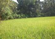 Land for sale in palakkad ,thenkurssi 5000/cent